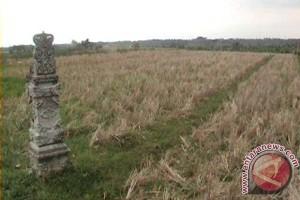 856 Hektare Sawah di Bali Kekeringan