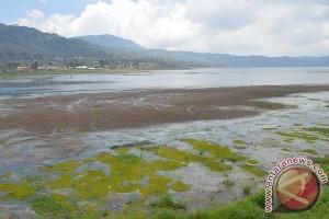 Petani Pancasari Resah Debit Air Danau Turun