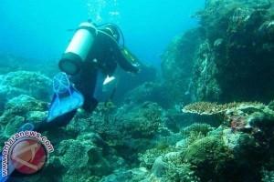Terumbu Karang Pemuteran Jadi Primadona Bawah Laut