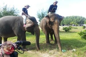 Gajah Bersihkan Sampah Plastik di Bali
