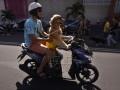 Anjing Kendarai Motor
