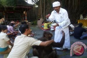 Bali Safari Gelar Ritual Tumpek Kandang