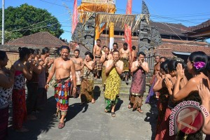 """Gubernur Bali Hadiri Ritual """"Ngusaba Dangsil"""""""