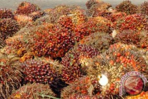 Government Warned Against EU's Palm Oil Discriminating Policy