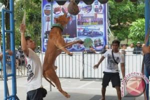 Kompetisi Ketangkasan Anjing