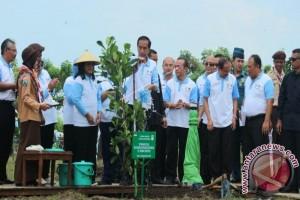 Jokowi di Tuban