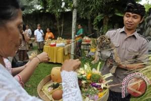 Umat Hindu Gelar Ritual Tumpek Kandang