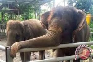 Anggota DPR Kunjungi Konservasi Gajah Di Bali