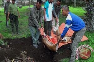 Empat Ekor Kijang Mati Akibat Perburuan Liar