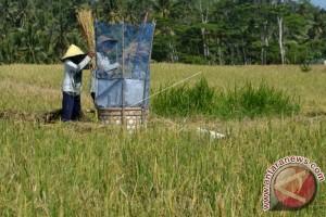 Buleleng Intensifkan Program Kawasan Rumah Pangan Lestari