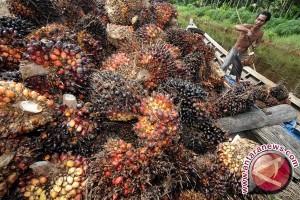 Suksma Amerika ikuti China-Pakistan impor sawit Indonesia