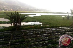 Luapan Danau Buyan Rendam Lahan Pertanian (video)