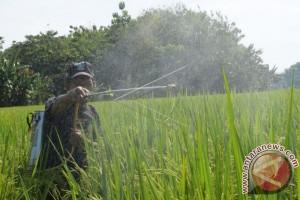Kembangkan Padi Jokowi