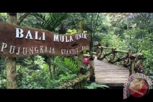 Uniknya BMU di Kawasan Wisata Pujung Kaja (Video)