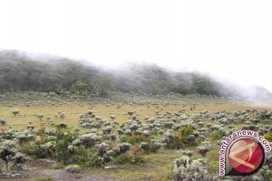 Sanksi Penjara Lima Tahun Bagi Pemetik Bunga Edelweis