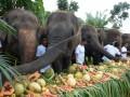 Pawang gajah memberikan makanan favorit gajah dalam rangkaian perayaan Hari Gajah Sedunia di kebun binatang Bali Zoo Gianyar, Bali, Sabtu (12/8). Bali Zoo merayakan Hari Gajah Seduniayang jatuh setiap tanggal 12 Agustus dengan menyediakan 60 kg buah-buahan favorit gajah dengan tema prasmanan sebagai hadiah spesial dalam perayaan tersebut. ANTARA FOTO/Wira Suryantala/wdy/2017.