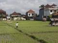 Produktifitas Sawah di Denpasar