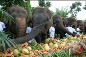 Bali Zoo Manjakan Gajah Makan Buah Prasmanan (Video)