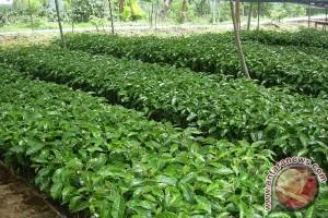 Balai Besar Pertanian Jelaskan Manfaat Sekam Padi