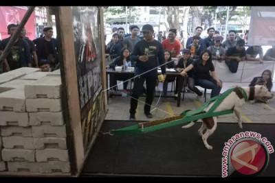 Kontes Ketangkasan Anjing