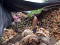 Petani Kelapa Kering Zona Merah Gunung Agung