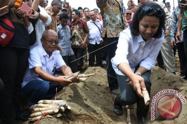 Menteri BUMN Tanam Tebu