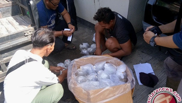 Police Foil Attempt to Smuggle Coral Reefs