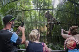 Semarakkan lebaran, Bali Zoo hadirkan wahana anak