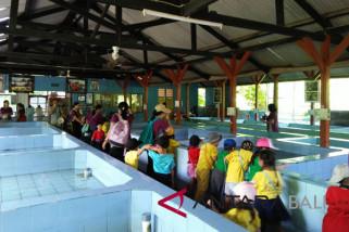 Siswa TK belajar konservasi penyu di Serangan (video)