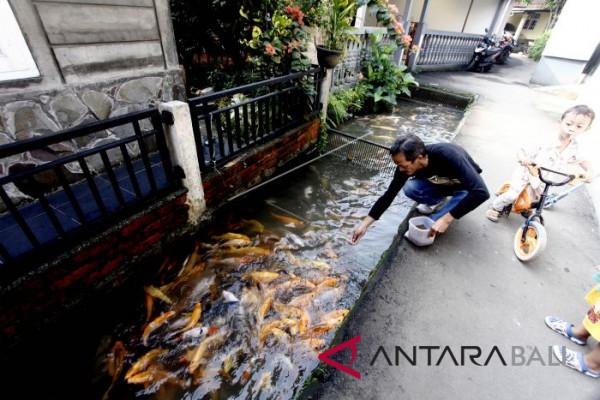 Pemanfaatan Drainase untuk Budidaya Ikan