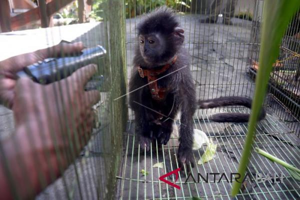 Satwa Tangkapan BKSDA Bali