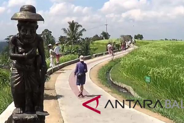 "Tabanan tambah wahana ""tracking"" wisata hamparan sawah Jatiluwih (video)"