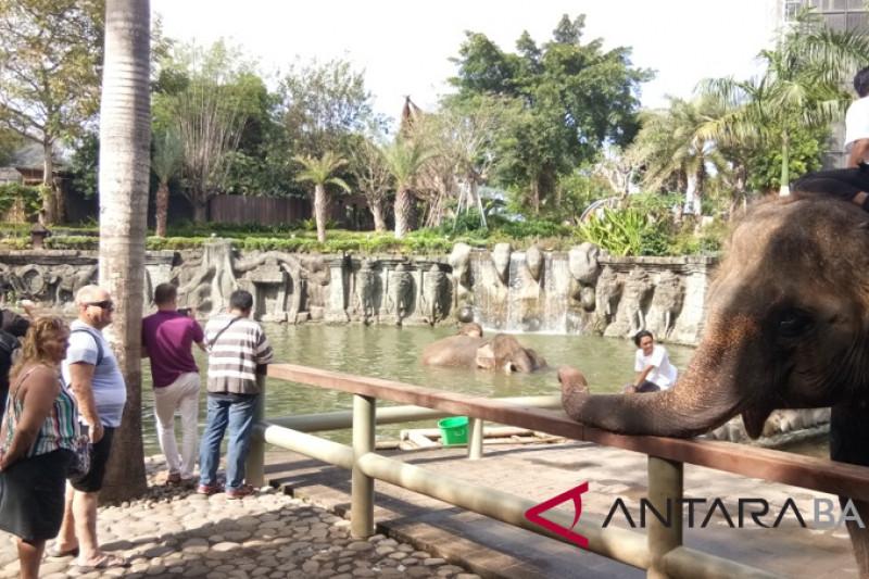 """Hari Gajah Dunia, """"Bali Zoo"""" suguhkan Gajah mandi massal"""