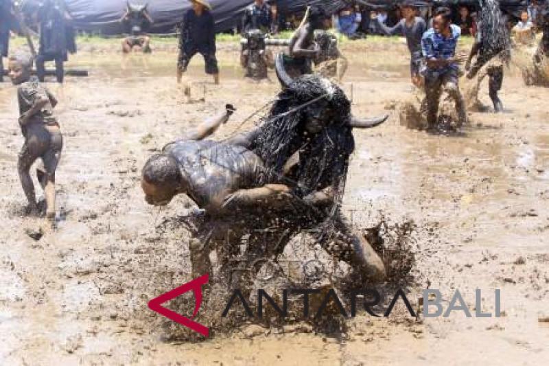 Foto - Ritual Adat Kebo-Keboan