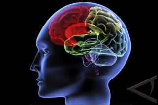 Stres bikin otak mengecil
