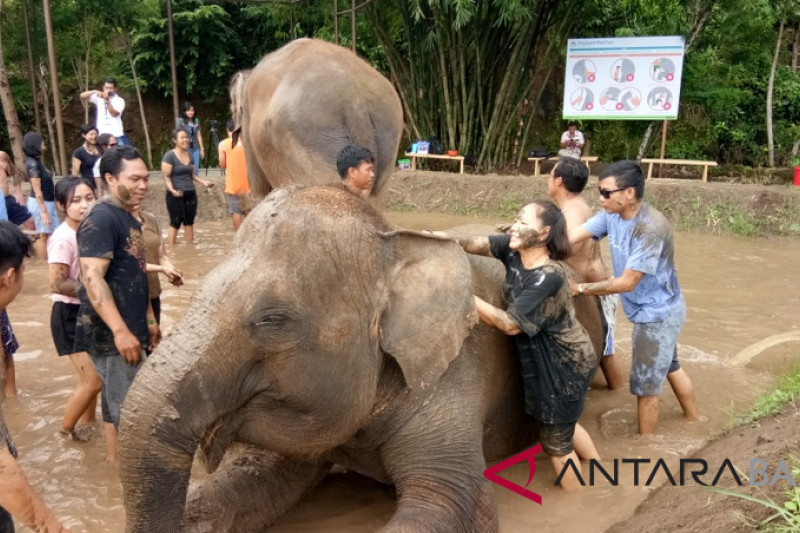 "Bali Zoo presents activity of ""mud bath"" with elephants"
