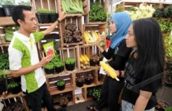 Petani Sayuran Majalengka Mendulang Sukses dari Benih Varietas Unggul