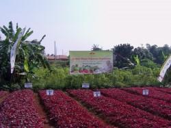 Indonesia Butuh Satu Juta Hektar Lahan Sayuran
