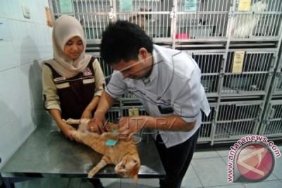 PDHI: Kenali Kesejahteraan Hewan Sebelum Memutuskan Memelihara