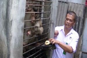 Warga Cilegon Serahkan Primata Sumatra ke BKSDA