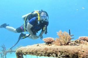 Biorock Pemuteran Membuat Ikan dan Turis Betah