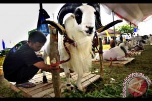 Lebak Juara Umum Kontes Kerbau Tingkat Provinsi