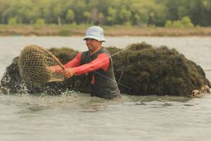 Astruli: Data Produksi Rumput Laut