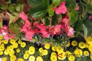 Asbindo Nantikan Kebijakan Pemerintah Dorong Florikultura