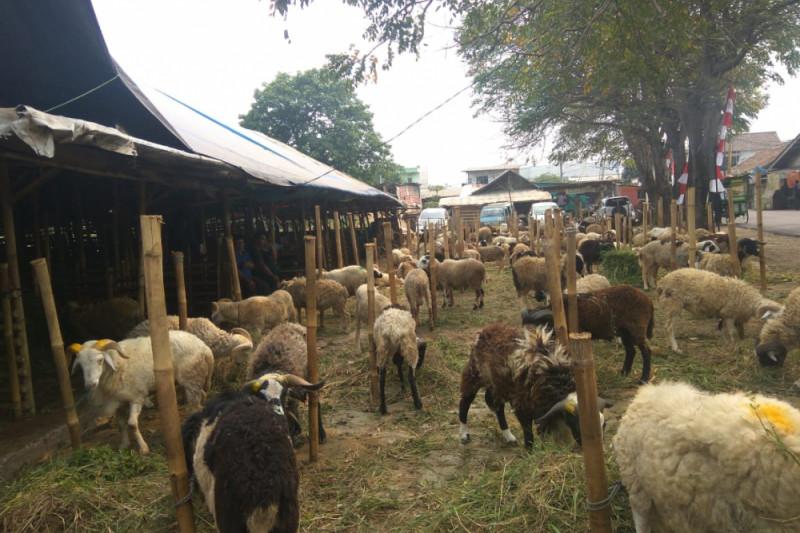 Pedagang Hewan Kurban Diminta Perhatikan Kebersihan Lapak Dagangan