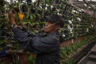 Ekspor Banten Juli Naik 45,91 Persen