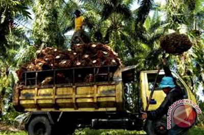Ekspor sawit Bengkulu turun 79,16 persen