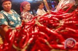 Harga Cabai Merah Di Mukomuko Mulai Turun