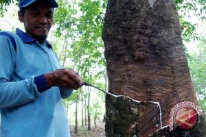 Petani Karet Mukomuko Menerima Bantuan Alat Pascapanen