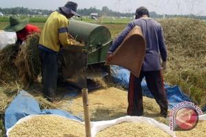 BPS: Produksi padi Bengkulu 593 ribu ton